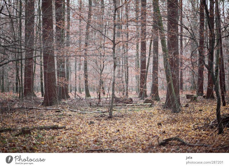 zwischendurch Umwelt Natur Landschaft Pflanze Herbst Baum Sträucher Wald natürlich braun Blatt Geäst Farbfoto Außenaufnahme Menschenleer Tag