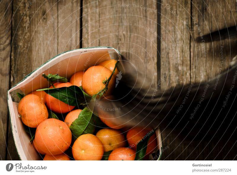 Naseweiß Katze Tier Tierjunges Frucht Lebensmittel Ernährung Neugier Haustier Geruch Holztisch Katzenbaby Mandarine Obstkiste