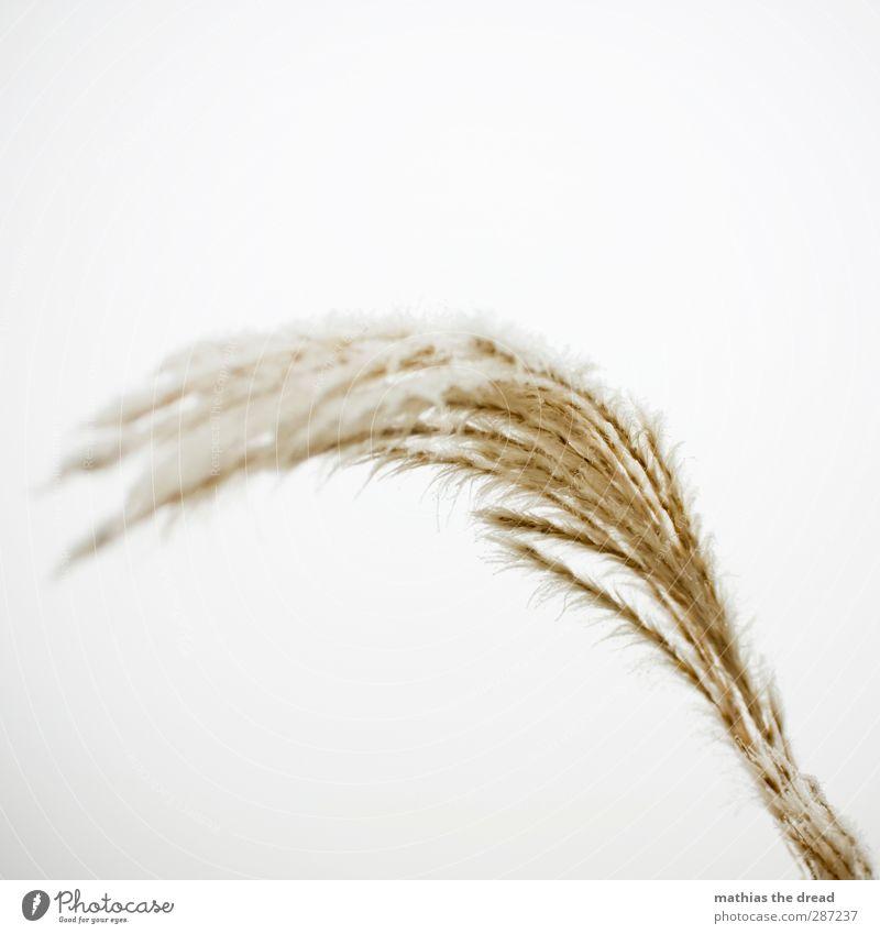 ES WIRD BALD KALT Winter schlechtes Wetter Eis Frost Schnee Gras Sträucher kalt bedeckt weiß sanft Farbfoto Gedeckte Farben Außenaufnahme Nahaufnahme