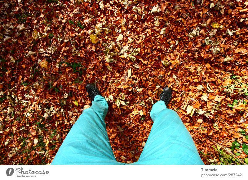 bunter Herbst wandern Beine Fuß 1 Mensch Umwelt Natur Erde Blatt Park Wald Hose stehen ästhetisch türkis Glück Zufriedenheit ruhig Farbfoto mehrfarbig