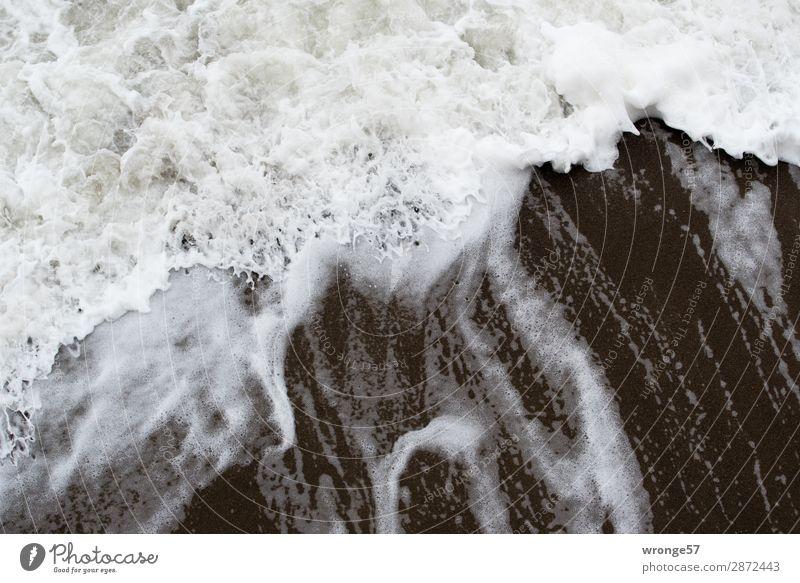 Brandungswelle Natur Sand Wasser Wind Sturm Wellen Küste Strand Ostsee bedrohlich Flüssigkeit maritim nass grau schwarz weiß Wasseroberfläche Meer