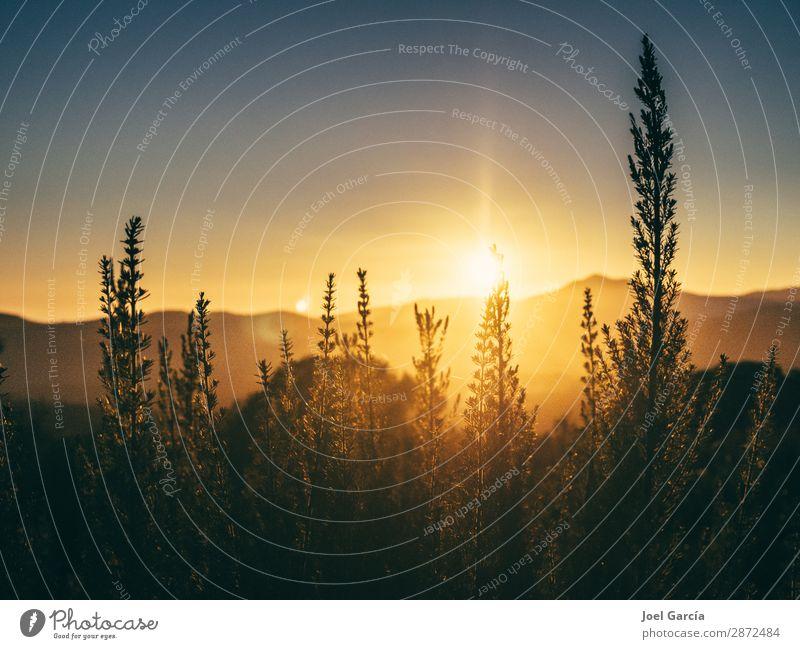 Himmel Ferien & Urlaub & Reisen Natur Sommer Pflanze Landschaft Sonne Wald Berge u. Gebirge Umwelt Frühling Gras Kunst Horizont wandern leuchten