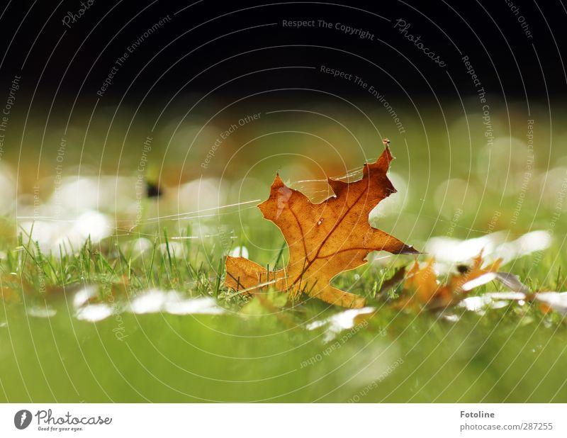 Den Herbst im Griff Umwelt Natur Pflanze Gras Blatt Garten Park Wiese hell nah natürlich braun grün herbstlich Herbstlaub Spinnennetz Farbfoto mehrfarbig