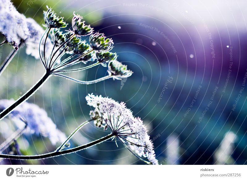 1000 und eine Nacht Umwelt Natur Pflanze Tier Luft Sonne Sonnenaufgang Sonnenuntergang Sonnenlicht Sommer Schönes Wetter Wind Wildpflanze Wiese Feld Blühend