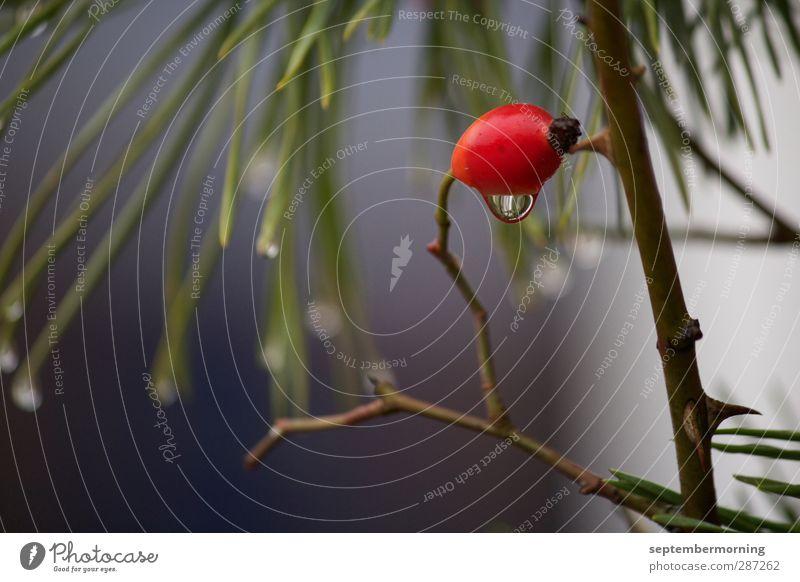 Novemberimpression I Natur Pflanze Herbst Tropfen schlechtes Wetter