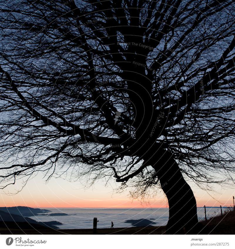 Guten Abend gute Nacht Natur Ferien & Urlaub & Reisen schön Baum ruhig Landschaft Ferne Umwelt dunkel Berge u. Gebirge Herbst Leben Freiheit Horizont Stimmung Klima