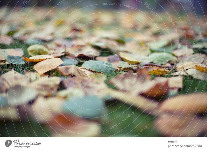 leafs leaves Natur grün Blatt Umwelt Wiese Garten natürlich Park