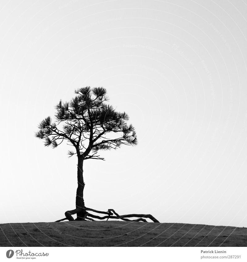 Happy Birthday photocase | Tree of Life Natur Pflanze Baum Einsamkeit Umwelt Leben Senior Bewegung Freiheit Luft Felsen Horizont Klima Zufriedenheit
