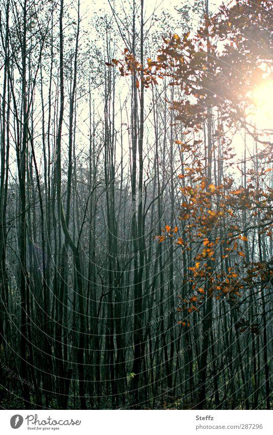 Happy Birthday Photocase | Hain Natur Herbst Baum Blatt Eichenblatt Zweig Herbstlaub Wald Wäldchen Herbstwald Nebelwald natürlich schön ruhig Waldstimmung