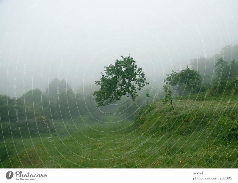 FOG Landschaft schlechtes Wetter Nebel Regen Baum Sträucher Nutzpflanze Feld Traurigkeit weinen wild grün Gelassenheit geduldig ruhig Verzweiflung Nervosität