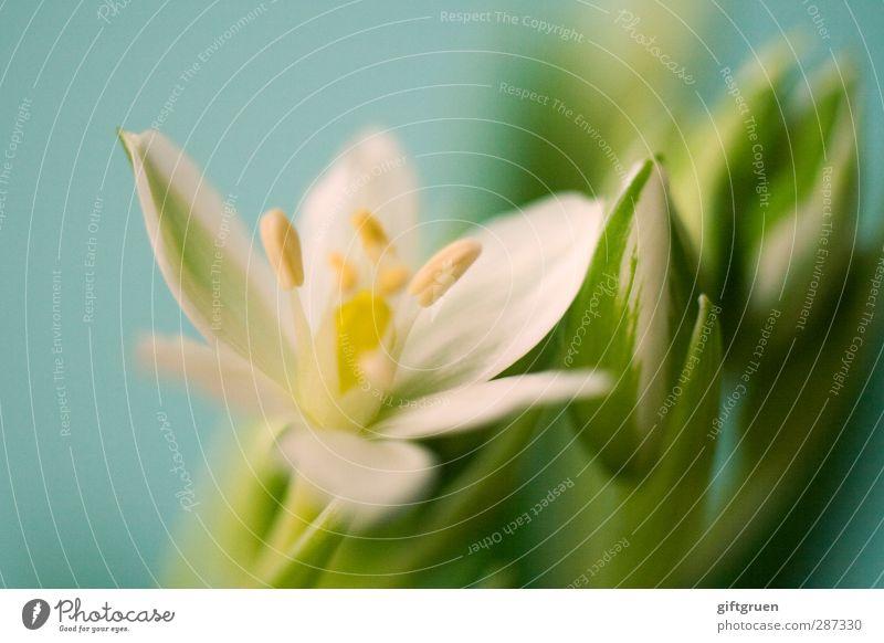 happy birthday, photocase! Natur grün weiß Pflanze Blume Blatt Umwelt Frühling Blüte frisch Beginn neu Blühend Botanik Blütenknospen Blütenblatt