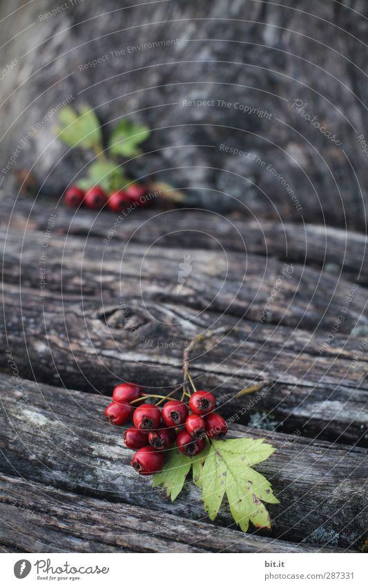 HAPPY BIRTHDAY - du bist heut im Vordergrund Natur Herbst Pflanze Baum Blatt Garten liegen saftig grün rot Holz Holzbrett Holzwand Baumstamm Beeren
