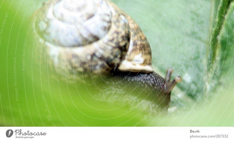 Happy birthday photocase | Schneckentempo Tier Wildtier Weinbergschnecken 1 stark weich braun grün fleißig diszipliniert langsam schleimig schleichen Farbfoto