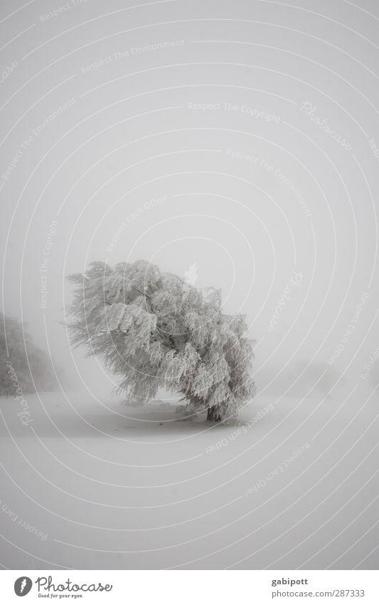 Winter // Happy Birthday photocase! Natur Landschaft Wetter schlechtes Wetter Nebel Eis Frost Schnee Schneefall Baum Feld kalt weiß ruhig Einsamkeit Idylle