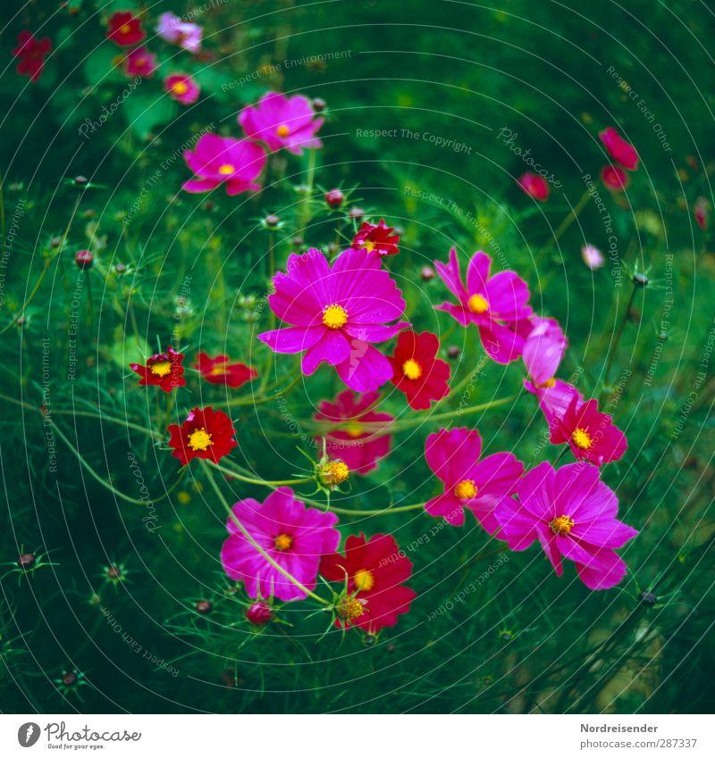 Happy Birthday Photocase | Blümchen Natur Sommer Pflanze Farbe Blume Blüte Garten Wachstum elegant frisch Fröhlichkeit Freundlichkeit Blühend Duft exotisch