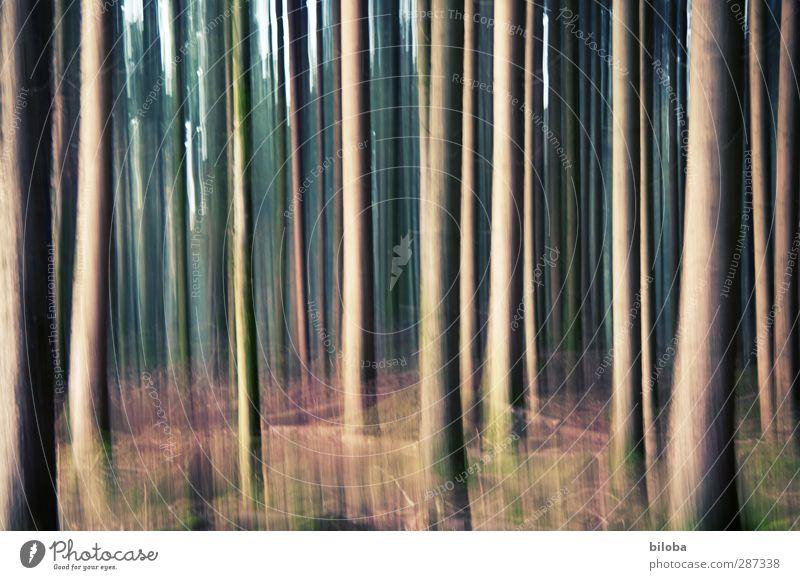 HAPPY BIRTHDAY PHOTOCASE Umwelt Natur Landschaft Pflanze Herbst Baum Wald braun grün schwarz Farbfoto Außenaufnahme Experiment Muster Strukturen & Formen