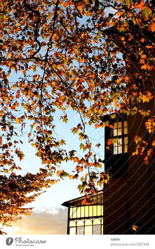 Happybirthdaypartylocation . . . Himmel Natur blau alt Pflanze Baum ruhig schwarz Haus gelb Umwelt Fenster dunkel Wand Herbst Berlin