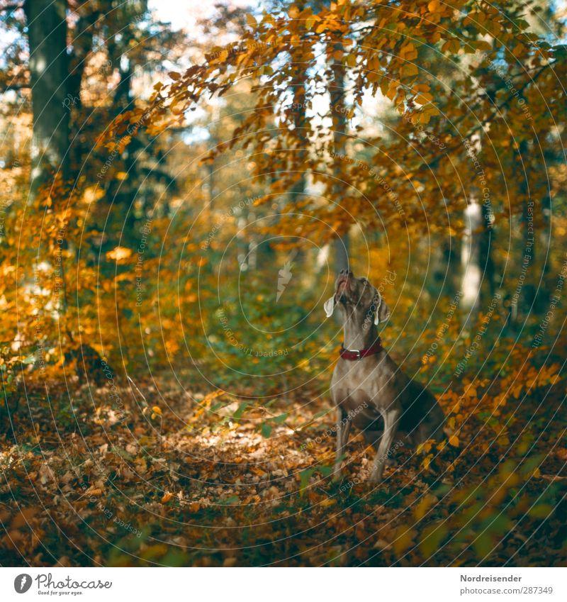 Ich wollte auch noch gratulieren.... Hund Natur Tier Landschaft Erholung Wald Herbst Stimmung Wetter sitzen Schönes Wetter ästhetisch Coolness Fitness Vertrauen