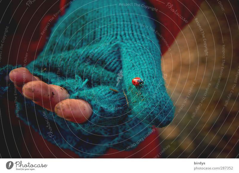 Hope | happy birthday photocase Hand Finger Handschuhe Marienkäfer 1 Tier Armut authentisch dreckig Liebe trösten bescheiden Hoffnung Traurigkeit