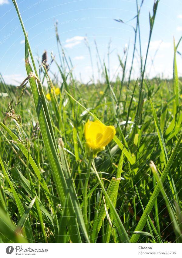 It's springtime... Wiese Gras Blume gelb Frühling Sommer Sonne Himmel