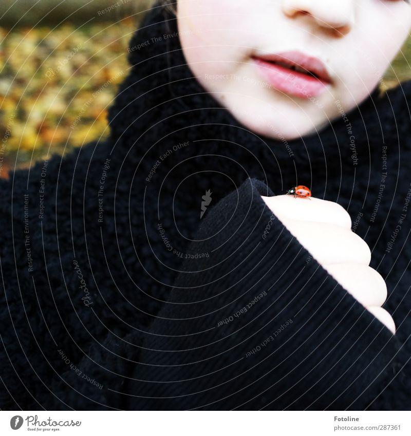 Happy Birthday Photocase!!! Mensch feminin Kind Mädchen Kindheit Haut Kopf Gesicht Nase Mund Lippen Arme Hand Umwelt Natur Tier Herbst Käfer 1 nah natürlich rot