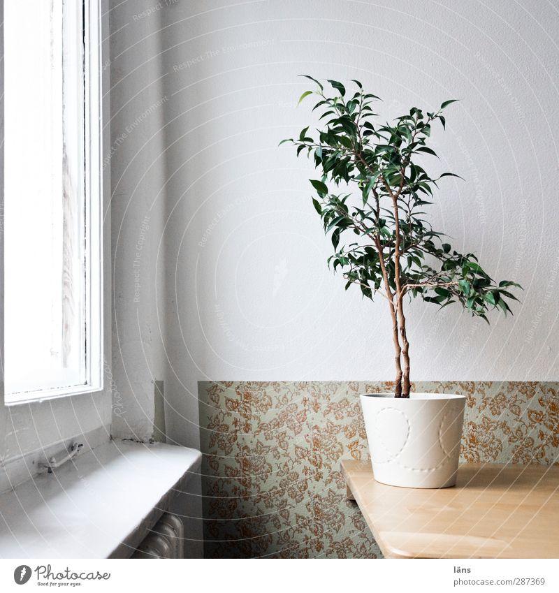 Happy Birthday Photocase | feierlich dekoriert Ferien & Urlaub & Reisen Pflanze Haus Fenster Wand Mauer Innenarchitektur hell Raum Wohnung Tourismus