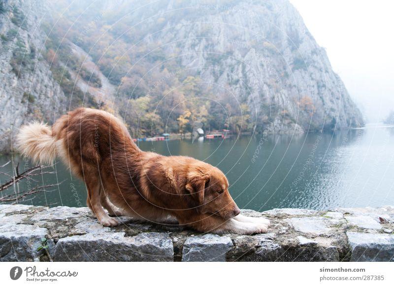 Hund Ferien & Urlaub & Reisen Ausflug Abenteuer Ferne Freiheit Städtereise Kreuzfahrt Berge u. Gebirge Umwelt Natur Herbst Winter Nebel Felsen Schlucht Seeufer