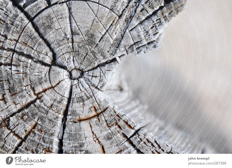 Happy Birthday, Photocase! | Jahresringe Natur alt Baum Umwelt Senior Holz grau natürlich kaputt Vergänglichkeit rund trocken Vergangenheit Verfall Baumstamm