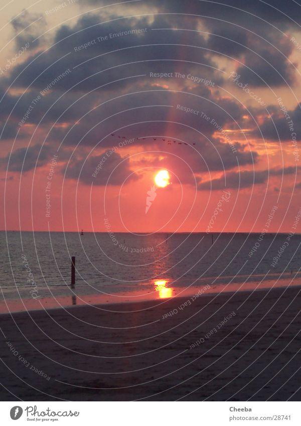 Sundown Sonne Meer Strand Wolken Sand Vogel rosa Pfosten Niederlande
