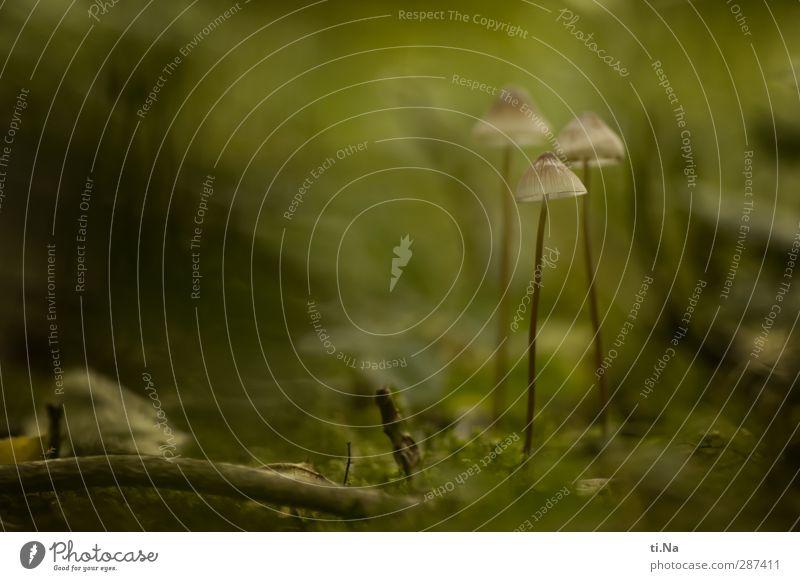 Die 3 Weisen aus dem Gartenland Stadt Pflanze Tier Wald Herbst klein natürlich Erde Wachstum Pilz Gift Wildpflanze Pilzhut