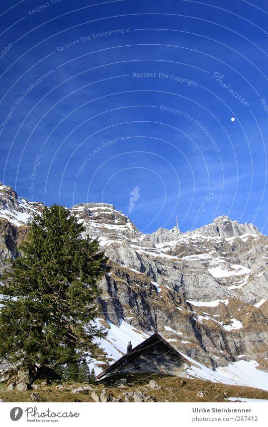 Der bleibt uns bis zum Frühling... Umwelt Natur Landschaft Pflanze Luft Himmel Schönes Wetter Schnee Baum Gras Tanne Felsen Alpen Berge u. Gebirge Säntis Gipfel