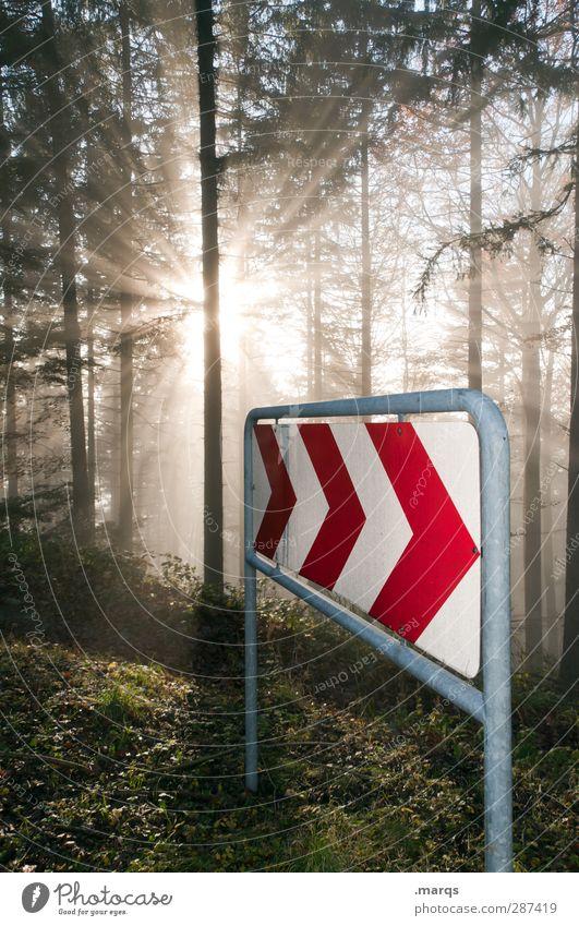 Neustart Natur schön Baum Sonne Wald Umwelt Religion & Glaube Klima Nebel Beginn leuchten Zukunft Vergänglichkeit Zeichen Pfeil Richtung