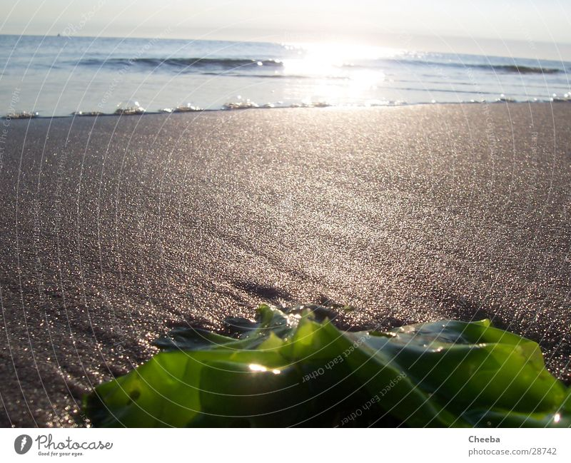 Rockanje Beach Sonne Meer Strand Sand Niederlande Algen Ebbe