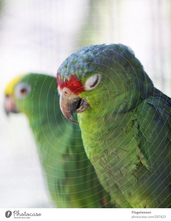 wake me up when november ends Natur Pflanze Tier Umwelt Vogel Wildtier Sex Lebensfreude festhalten Müdigkeit Haustier Zoo Nutztier Krankheit Papageienvogel