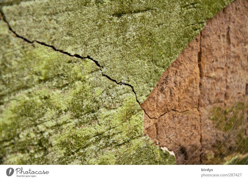 Lebenslinie Wand Senior Mauer authentisch kaputt Wandel & Veränderung Bauwerk Verfall Riss Putzfassade