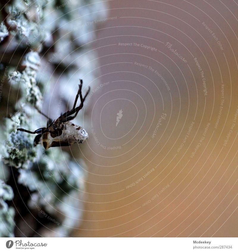 Kopfüber Natur Pflanze Herbst Baum Park Tier Wildtier Totes Tier Spinne 1 außergewöhnlich dünn klein stark blau grau orange rosa schwarz weiß zerbrechlich