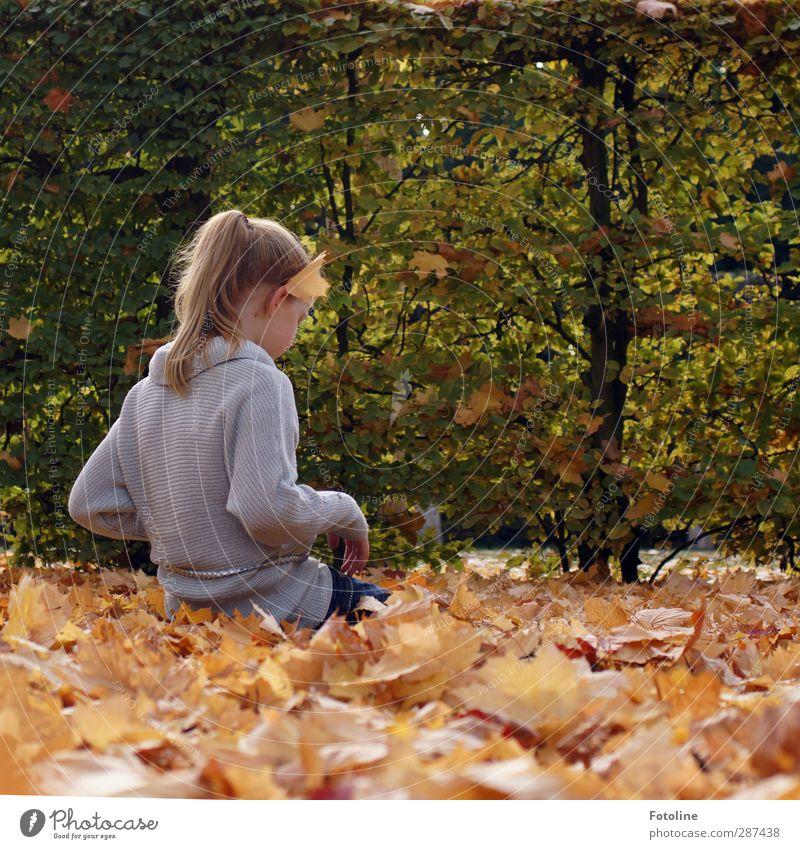 Herbstvergnügen Mensch feminin Kind Mädchen Kindheit Körper Haut Kopf Haare & Frisuren Gesicht Ohr Rücken Arme Hand Finger Umwelt Natur Pflanze Sträucher Blatt