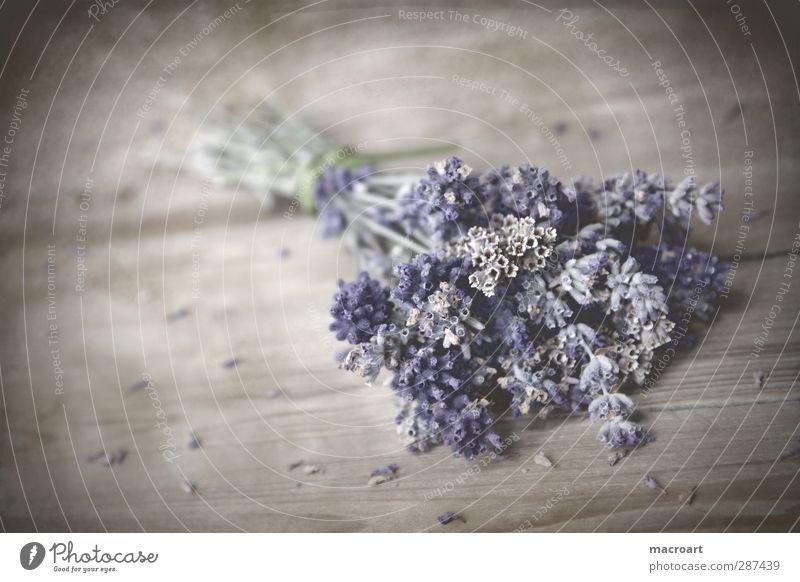 lavendel Blume Holz Blüte natürlich Tisch Dekoration & Verzierung ästhetisch Blühend violett Blumenstrauß Duft Holzbrett Seele Geruch Medikament