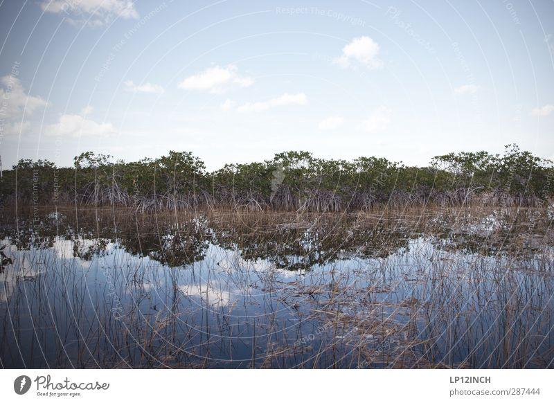 Fluss aus Gras. XXIX Natur Ferien & Urlaub & Reisen Wasser Pflanze Tier ruhig Landschaft Ferne Umwelt Klima wild Tourismus gefährlich Ausflug Abenteuer