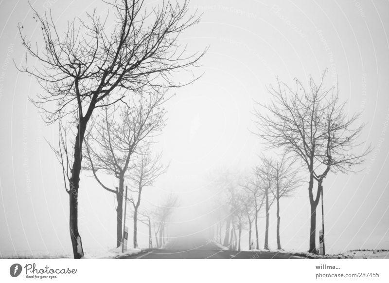 nebelfahrt ins ungewisse Landschaft Winter Nebel Schnee Baum Straße Landstraße Allee kalt trist grau schwarz weiß kahl Unendlichkeit Ungewisse Zukunft
