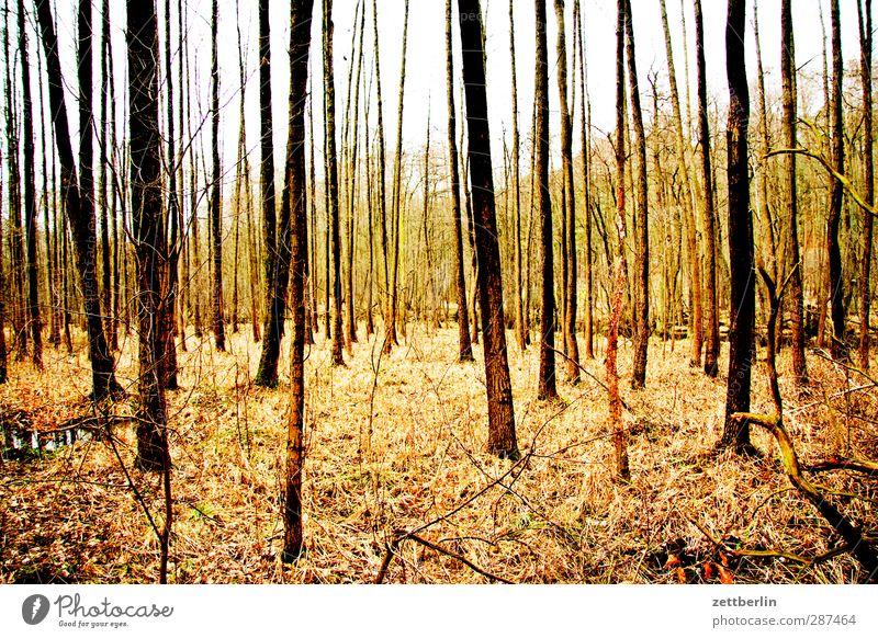 Wald again Umwelt Natur Landschaft Herbst Klima Klimawandel Wetter Schönes Wetter Pflanze Baum gut schön Laubwald Mischwald Herbstlaub Baumstamm Blatt