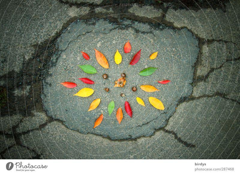 street - ART schön Farbe Blatt Herbst Kunst außergewöhnlich frisch Fröhlichkeit leuchten ästhetisch Kreis Blühend Asphalt Riss Herbstlaub positiv