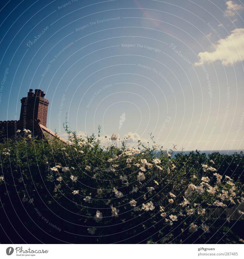 blickdicht Pflanze Blume Sträucher Garten Blühend Hecke Blütenpflanze Sichtschutz Schutz Grenze Schornstein Dach Gebäude Gebäudeteil Himmel Horizont weiß Blick