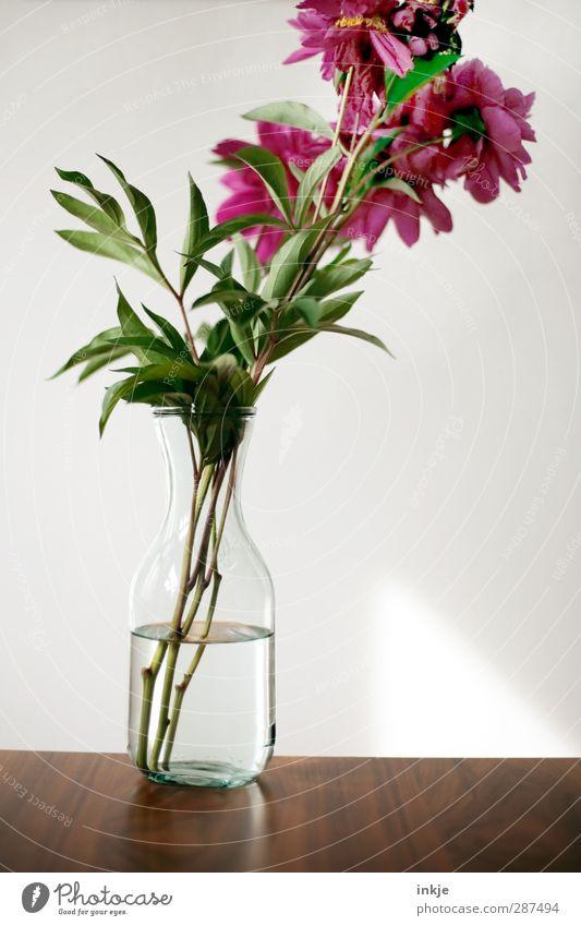 Pfingsrose, pur Wasser grün schön rot Blume Holz braun natürlich rosa Glas frisch Dekoration & Verzierung Tisch ästhetisch einfach Klarheit