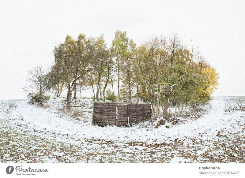 Privatgrund grün weiß Baum Einsamkeit ruhig Winter Landschaft kalt Schnee klein Garten Feld Erde ästhetisch trist