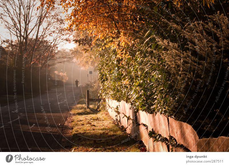 Herbstspaziergang Umwelt Natur Landschaft Luft Pflanze Baum Garten Wiese laufen Wege & Pfade Morgen Morgennebel Jahreszeiten Zaun Gartenzaun Straße Straßenbelag