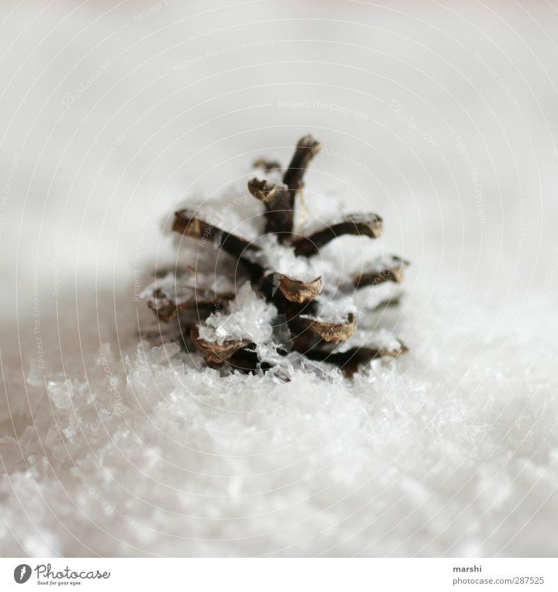 Wintereinbruch Weihnachten & Advent weiß Schnee Schneefall braun Dekoration & Verzierung Zeichen Tannenzapfen