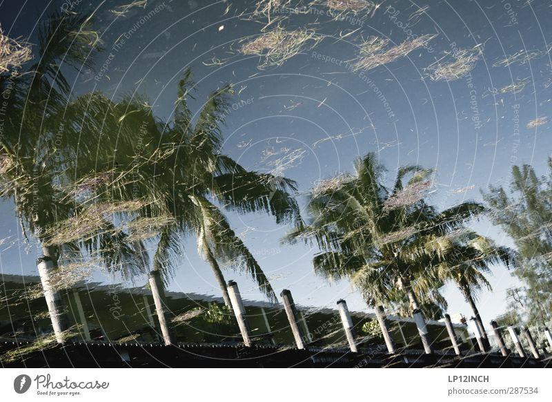 Floridanische Spiegelung. XXX Ferien & Urlaub & Reisen Tourismus Ausflug Ferne Sommerurlaub Umwelt Natur Wasser Schönes Wetter Palme Florida Keys USA Haus Hütte