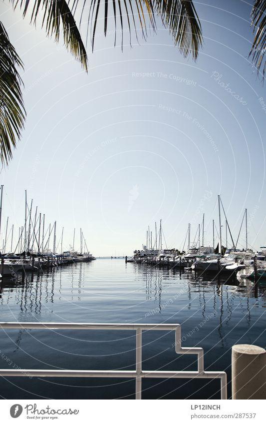 Coconut Grove/Port. XXXI Freizeit & Hobby Segeln Wasser Palmenwedel Miami Florida USA Ferien & Urlaub & Reisen Erholung erleben Reichtum Tourismus Segelboot