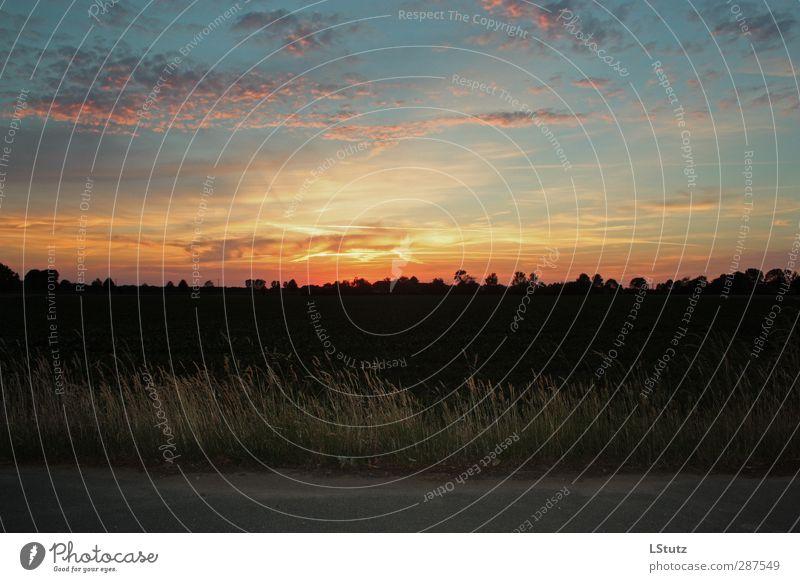 sleepy sun Himmel Natur blau schön Sommer rot Wolken ruhig schwarz gelb Umwelt Leben Frühling Wege & Pfade Horizont orange